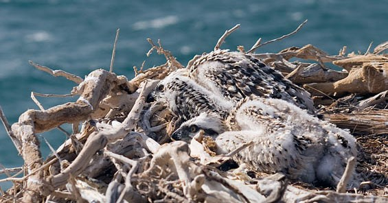 Amazing views of our anchorage, nesting osprey chicks and Dudo