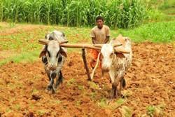 Lamka village farmer in Eritrea