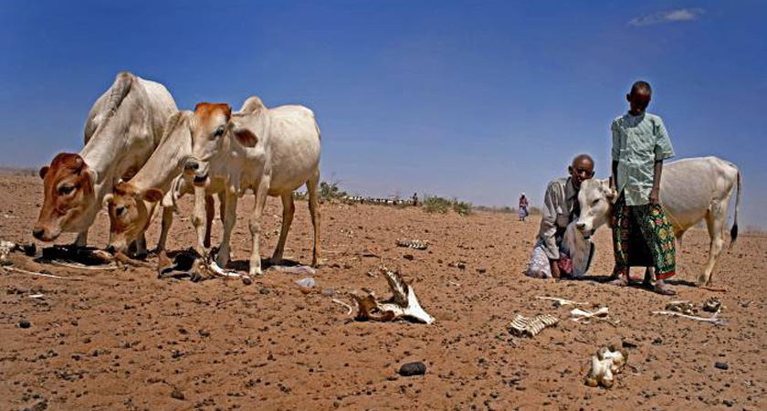 Ethiopia Drought 'Leaves a 10th of the Population' Without Food