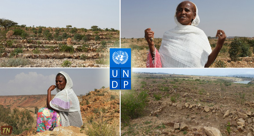 Eritrean Women Take Lead in Conservation of Mai Nefhi Dam Catchment Area