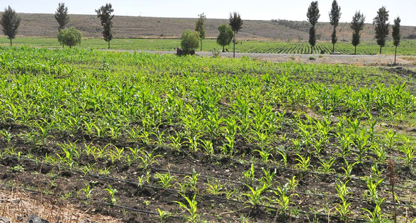 Egypt Agriculture Ministry Delegation in Eritrea