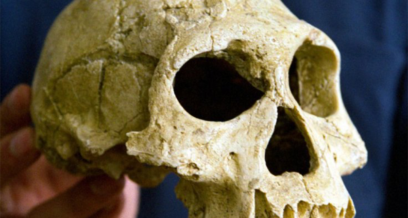 Eritrea: Discovery of Ancient Human Remains in Buya