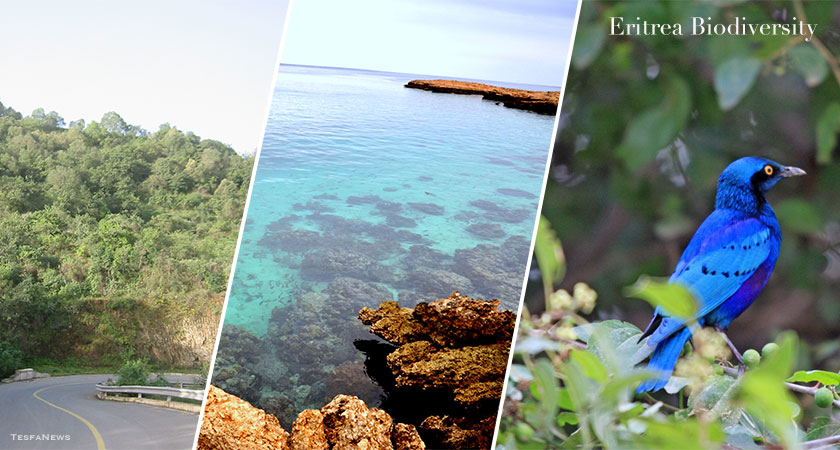 Securing Biodiversity through Protecting Areas