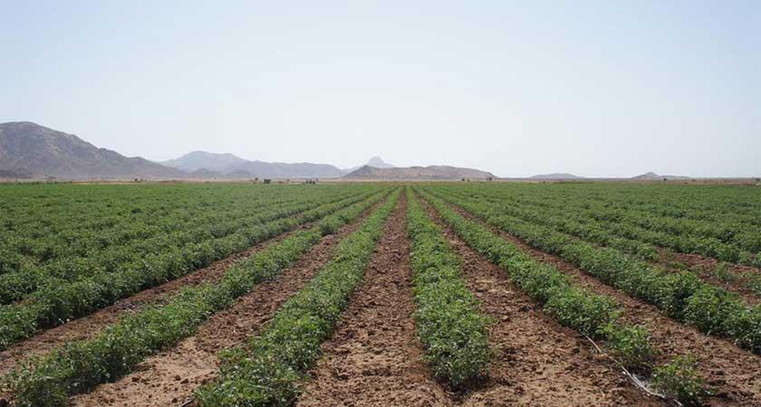food security in Eritrea