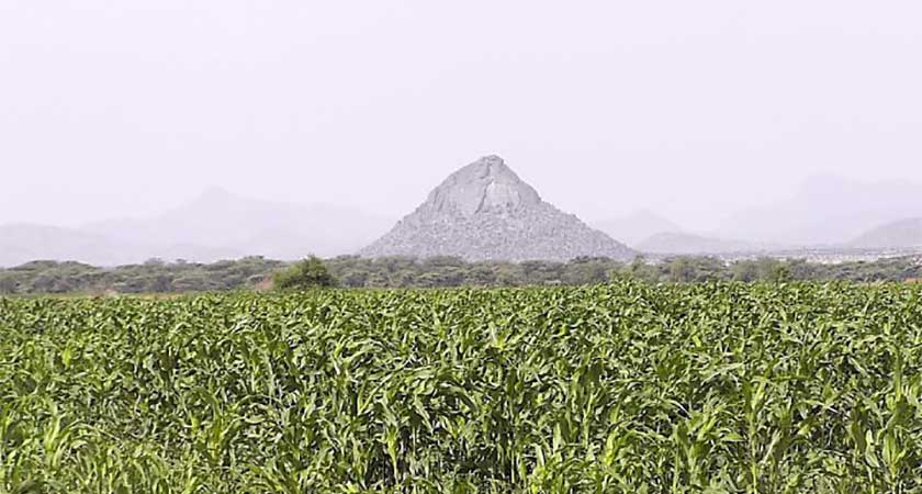 Eritrea Agriculture Ministry Releases 'Small and Medium Commercial Farmers Strategy'