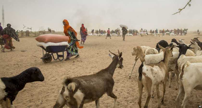 Deepening Drought Hits Ethiopia Herders as Millions Go Hungry