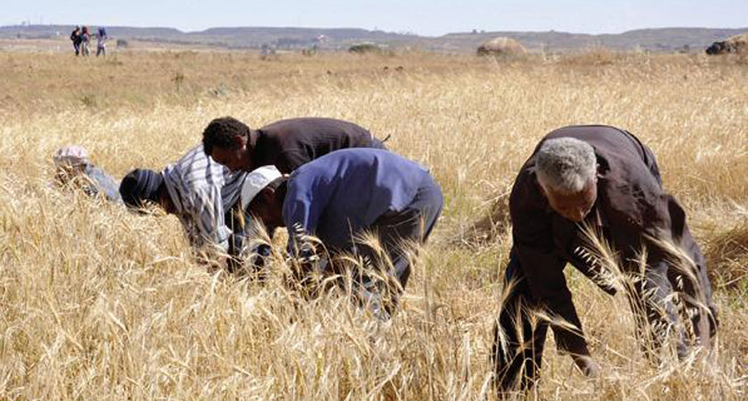 Africa Development Bank supports Eritrea agriculture and infrastructure development