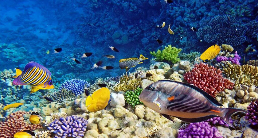 Eritrean Red Sea: The Untouched Diving Paradise