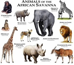 animals commonly found in the African Savanna today