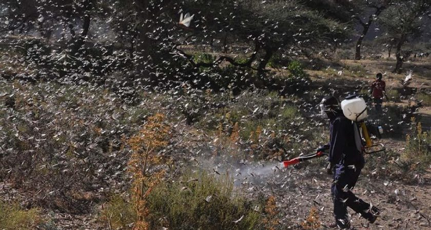 Desert Locust Combating Activities Continue