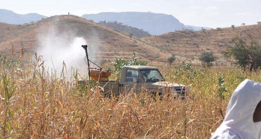 Desert Locust Situation in Eritrea
