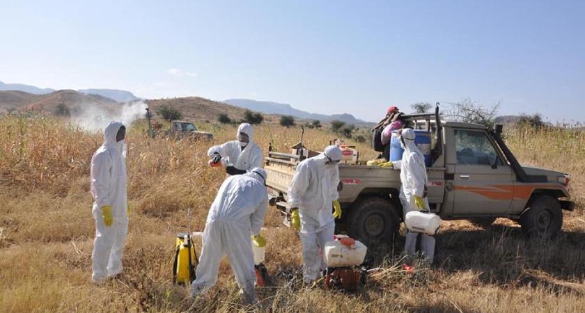 Locust swarm that crossed the border from Ethiopia's Tigray region was put under control