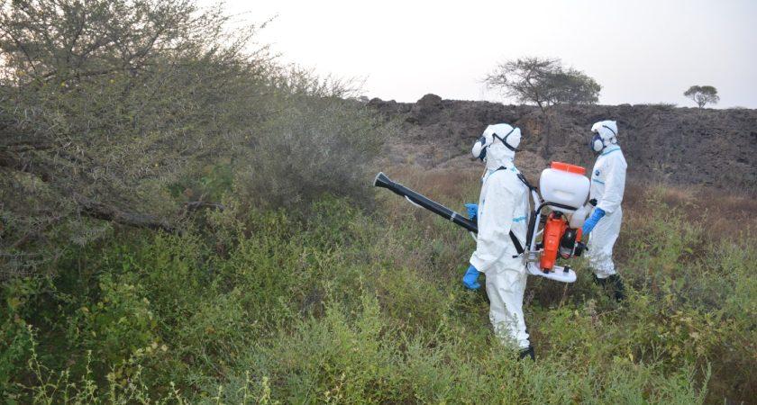 Eritrea Controls New Desert Locust Invasion